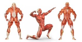Революция мускулов
