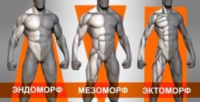 Типы телосложения — эктоморф, эндоморф, мезоморф