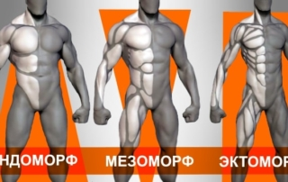 Соматотипы - эндоморф, мезоморф, эктоморф